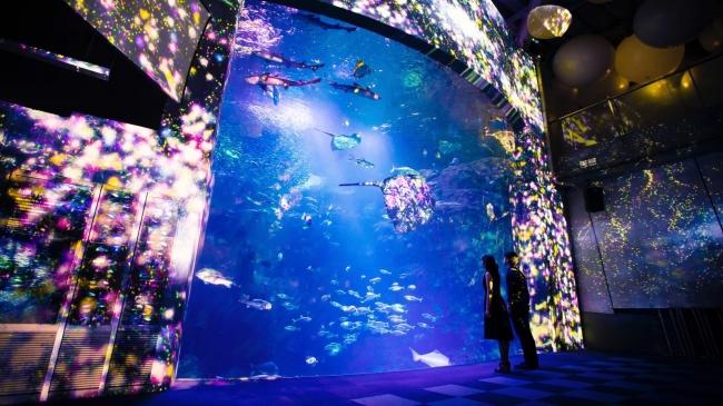 「えのすい×チームラボ ナイトワンダーアクアリウム2015」の「花と魚- 相模湾大水槽」がクリスマスの演出に